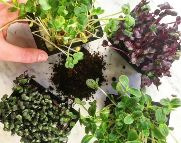Micro ortaggi piccole piante grandi benefici pronto for Piccole piantine