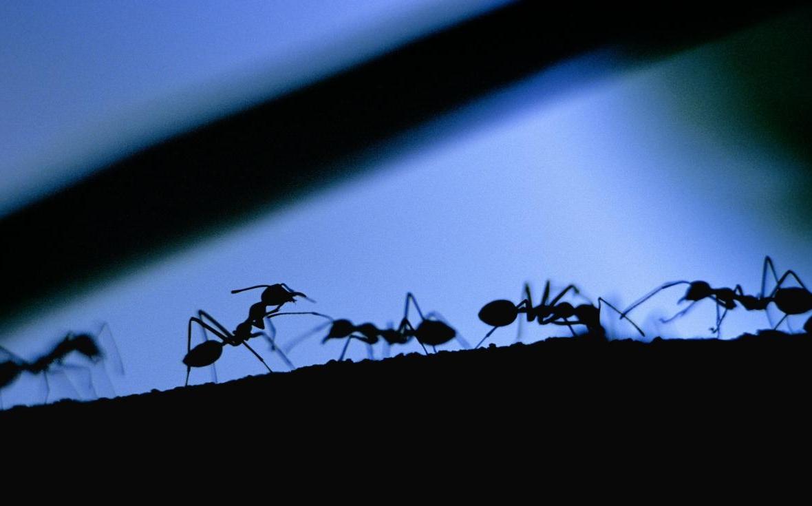 I rimedi naturali per eliminare le formiche da casa tgcom24 - Rimedi per le formiche in casa ...