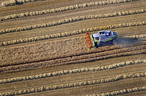 Le aziende agricole in Italia: occupazione in calo nel 2013