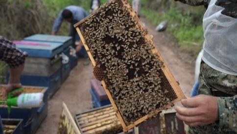 """Ricerca: """"Il veleno di api, scorpioni e rettili uccide alcune cellule tumorali"""""""