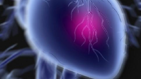 Scoperta negli Stati Uniti la proteina che rigenera il cuore dopo l'infarto