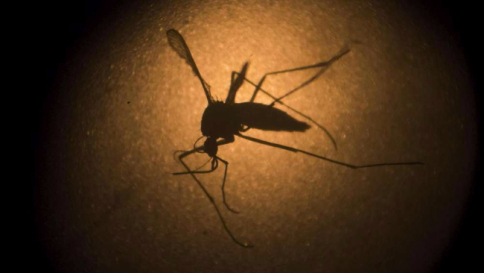Zika, ricercatori brasiliani: virus trovato in saliva e urine