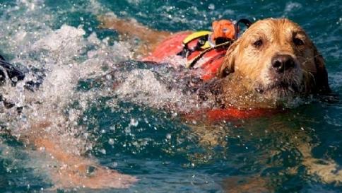 Venezia, tre cani bagnino salvano una coppia nel mare di Caorle