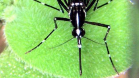 Il virus zika, il nuovo nemico