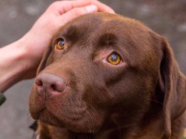 I cani riconoscono le emozioni umane: ora lo dice anche la scienza
