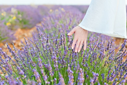 Lavanda: non solo il piacere del profumo, ma un aiuto per pelle e occhi