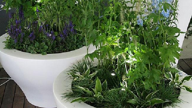 Le dieci piante da ufficio pi salutari purificano l - Pianta da ufficio ...