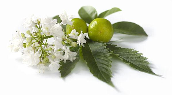 Tonificante e stimolante, l'olio essenziale di patchouli per pelli morbide e lucenti