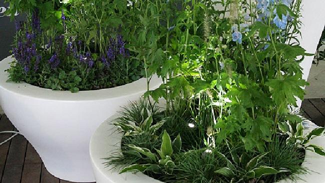Come curare le piante quando sei in vacanza tgcom24 for Curare le piante