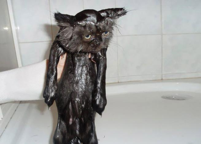 Anche i gatti fanno il bagno: felici come una pasqua! - Tgcom24 ...