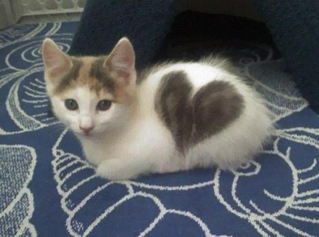 Favorito Pelo creativo: ecco i gatti con i cuori tatuati - Tgcom24 - Foto 2 UQ16