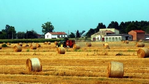 Arriva il contadino hi-tech: un'app protegge i raccolti in modo green