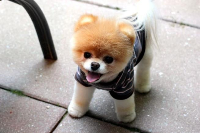 I 25 Cani Più Carini Del Web Tgcom24