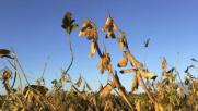 Clima, sale l'allerta per i parassiti killer delle colture
