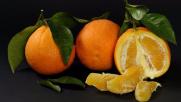 L'acqua si depura con bucce d'arancia e scarti industriali