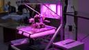 Astronauti contadini, per la prima volta mangeranno cibo coltivato nello spazio