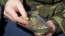 """L'Italia dà il via libera alla coltivazione della """"marijuana di Stato"""""""