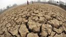"""Nel terreno le """"armi biologiche"""" contro i cambiamenti climatici"""