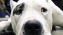 Milano, accarezza il cane: clochard ucciso a calci e pugni da un 22enne