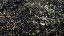 Svezia, energia pulita dagli scarti delle olive