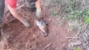 Brasile, cane sepolto vivo nel <br>terreno salvato dai vigili del fuoco