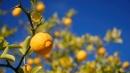 Olio di limone per il beauty fai-da-te