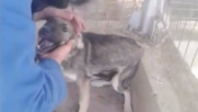 Romania, cane abusato riceve le prime carezze: la sua gioia