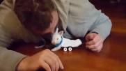 Usa, coniglio paralizzato si salva grazie a uno skateboard