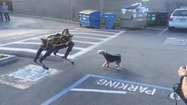 """Il cane vero non dà tregua al cane robot: """"Il migliore amico dell'uomo sono io!"""""""