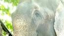 Elefante libero, lacrime di gioia