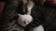 Coppia di gatti adotta un cucciolo disabile