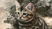 Tanti auguri ai tutti i gatti: il 17 febbraio è la loro festa