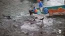La denuncia di Sea Shepherd: a Taiji<br>ogni anno uccisi più di 20mila delfini