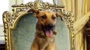 Casa Rosada, un cane sulla poltrona presidenziale
