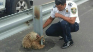 Ecuador, bradipo star del web: ha bloccato un'autostrada