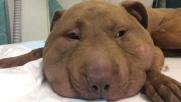 Oristano, cane semi decapitato con un laccio