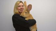 Scozia, il coniglio gigante Atlas cerca una nuova casa
