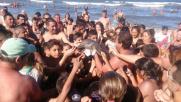 """Baby delfino ucciso per un selfie, turisti: """"Era già morto"""""""