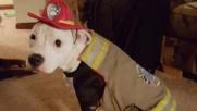 Usa, cane sopravvive a un incendio e diventa pompiere