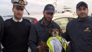 Olbia, cagnolino cade in mare: salvato da guardia costiera