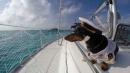 Crusoe, il cane che naviga alle Bahamas come un velista: il viaggio finisce sul web