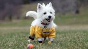Caldi e fosforescenti: pantaloni all'ultima moda... per cani