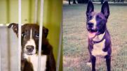 I cani prima e dopo l'adozione: la felicità negli scatti virali