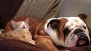 Cani e gatti amici per la nanna: si dorme su morbidi cuscini