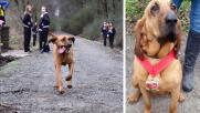 Usa, cane corre per sbaglio mezza maratona e si piazza 7°
