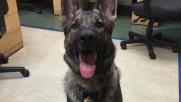 Il cane poliziotto che è diventato una star di Instagram