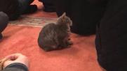 Istanbul, gatti randagi trovano riparo nella moschea