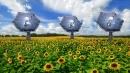 I <i>girasoli solari</i> forniscono energia, <br>calore e acqua potabile