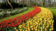 Olanda: i tulipani da sogno dei giardini Keukenhof