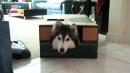 Un cane che si comporta come un gatto? Esiste e si chiama Tally